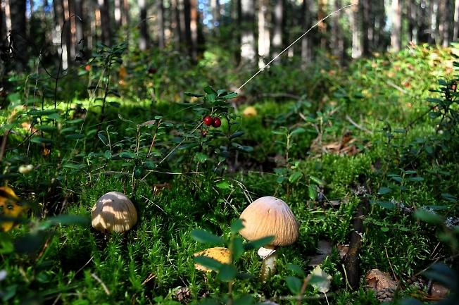Из жизни леса