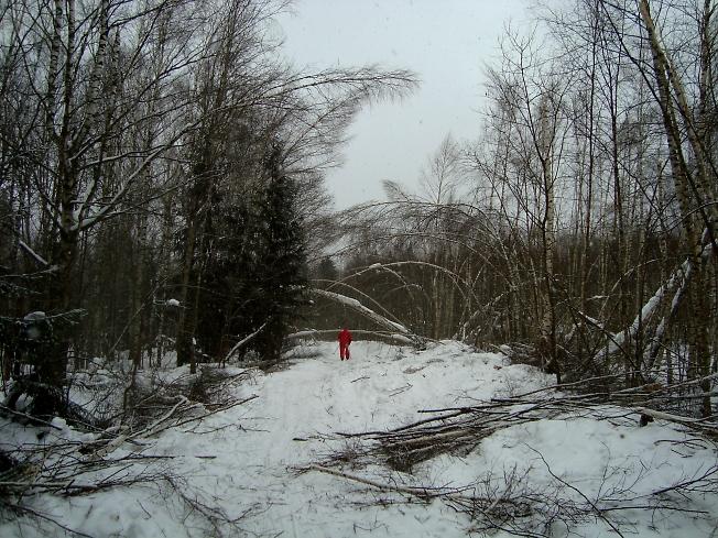 Бывает и такая лыжня. Природные последствия того же ледяного дождя.