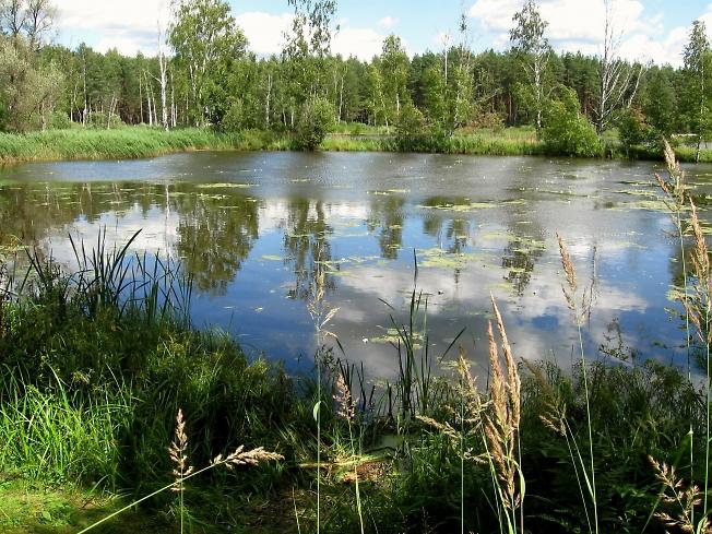 На Лесном озерце