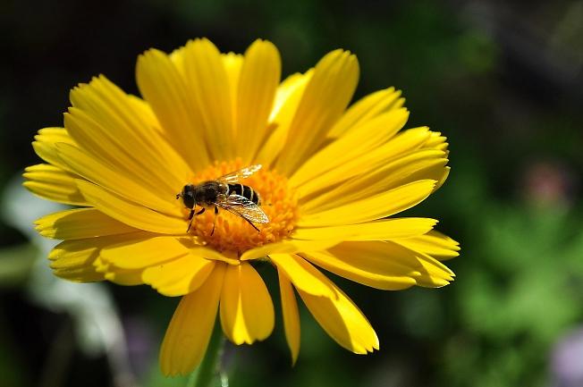 Трудолюбивая пчелка