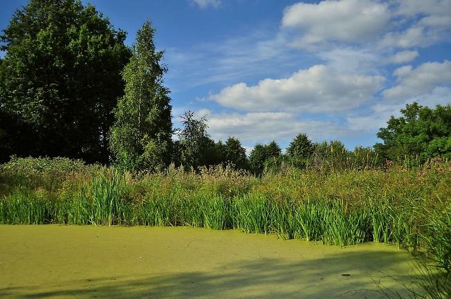 Пейзажик с тинным прудом