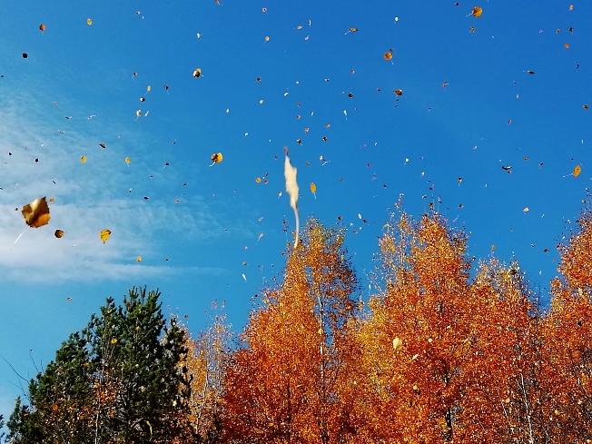 Осенний золотой  листопад