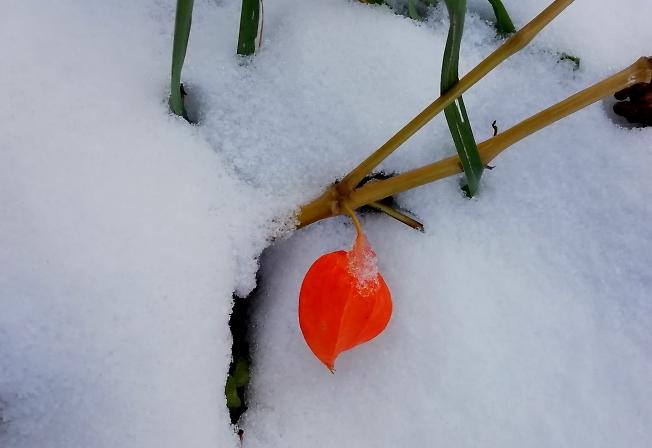 Фонарик на снегу