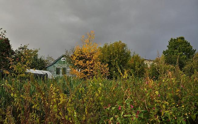 Осенними огородами