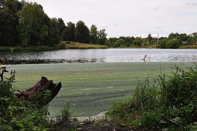 Рыбина выскочила из воды на Скитских прудах.