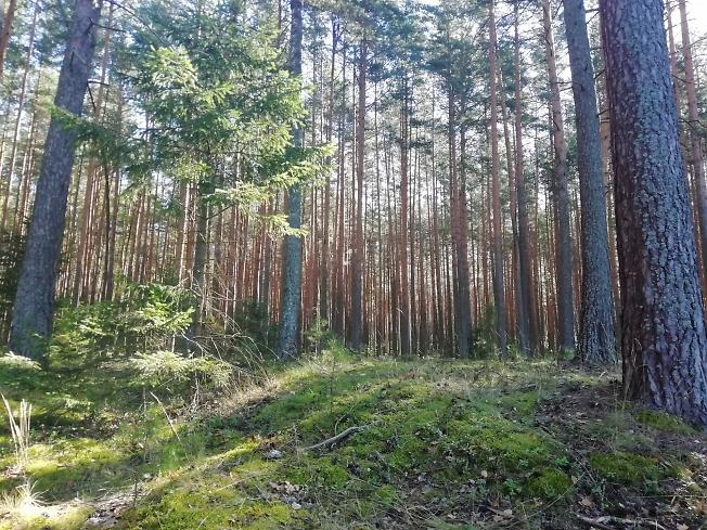 Торгашинский лес :)