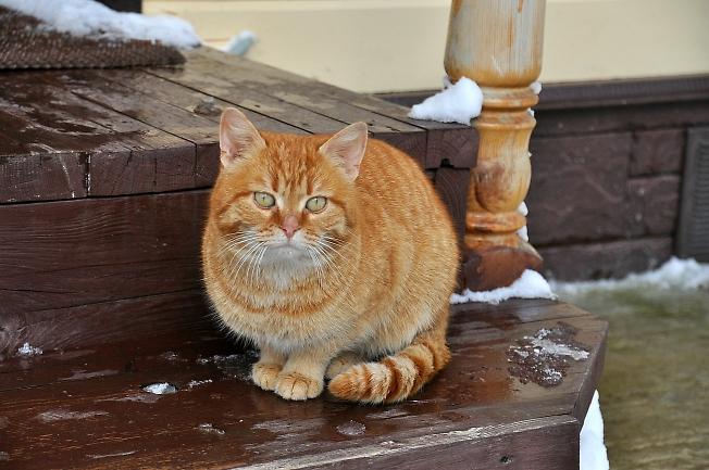 Портрет мартовского кота
