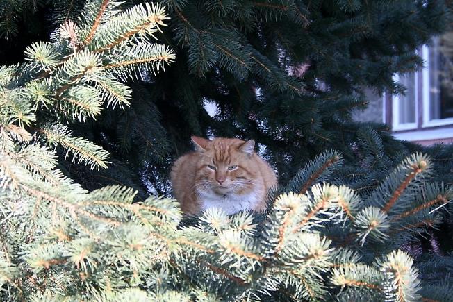 Елочный кот