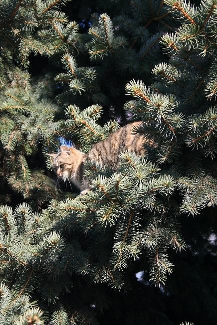 Елочный кот 2