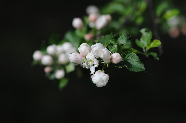 Опять цветочки)
