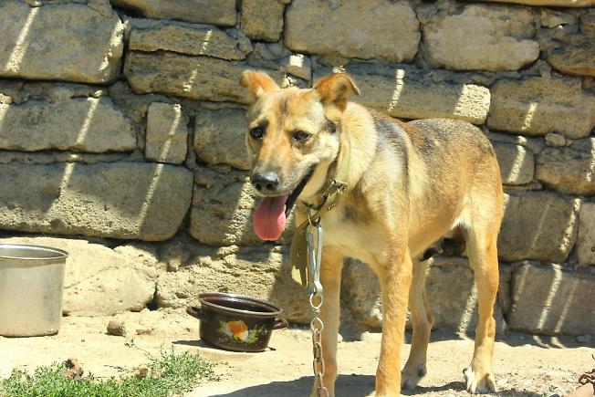 Собака на цепи... в Крыму)))
