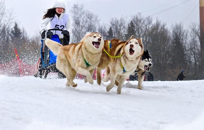 Смешные собаки)