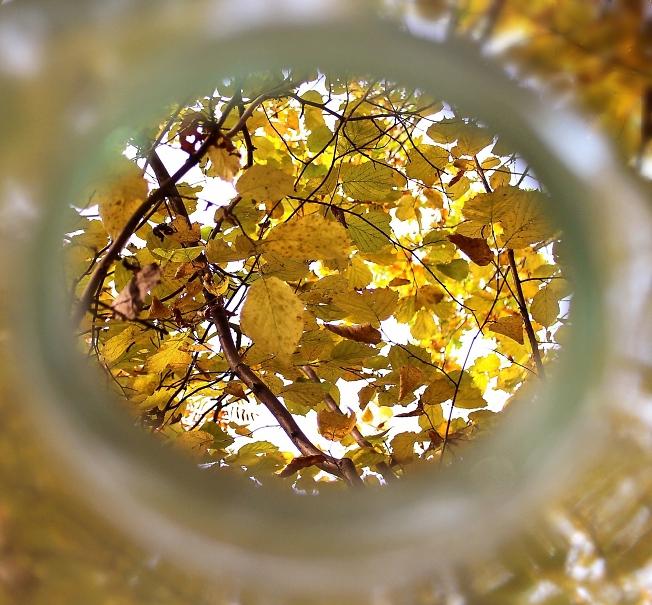 Вид на осень из банки