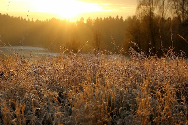 Ферма.Морозное утро.