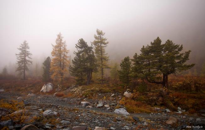 Осень,окутанная туманом.