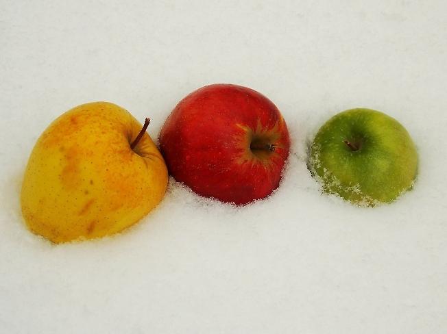 Яблоки на снегу - так беззащитно мерзнут Словно былые весны, что в памяти берегу Яблоки на снегу медленно замерзают Ты их согрей слезами, я уже не могу ....i