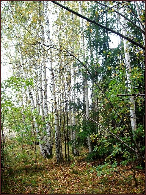 В лесу, ранней осенью
