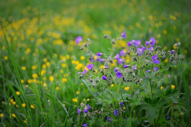Весна в полях
