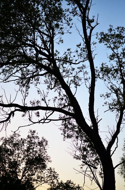 Дерево над погостом