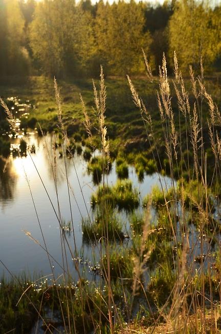 Новенький пруд
