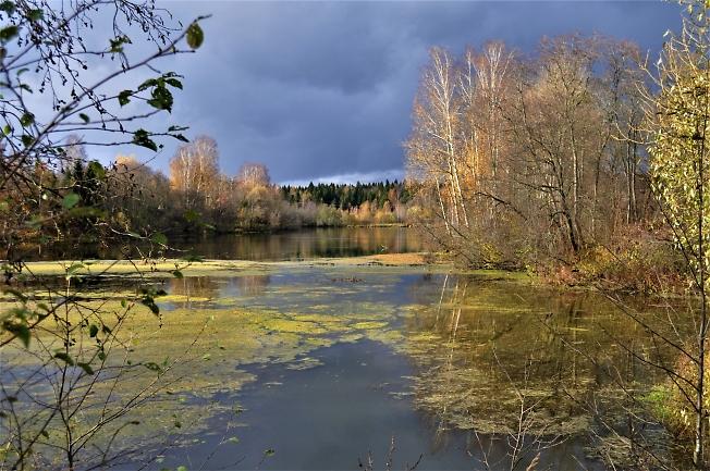 Старый пруд - любимый пруд
