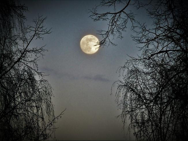Луна на ветке