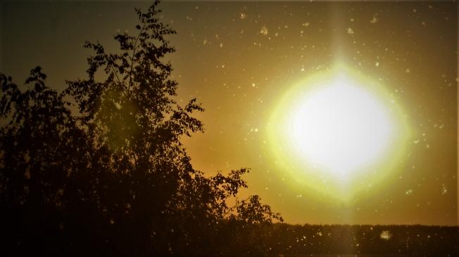 Тополиный пух на закате