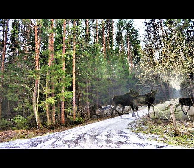 Встреча на зимней дороге