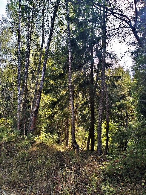 На опушке леса