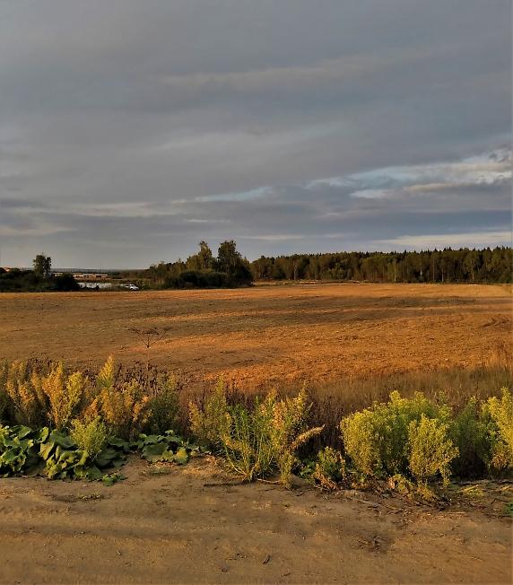 Засеянное поле