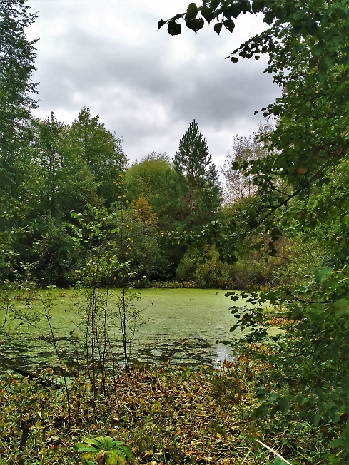 Усадебный пруд