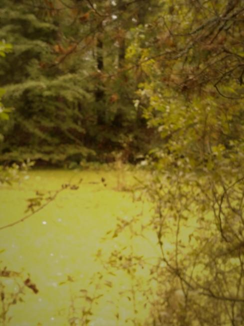 Осенний мотив   (усадебный пруд)