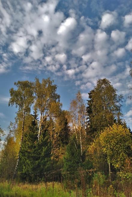 Лес завороженный