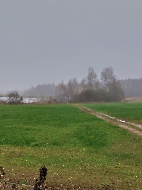 Любимый пейзаж в тумане