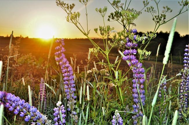 Солнечный привет цветочкам