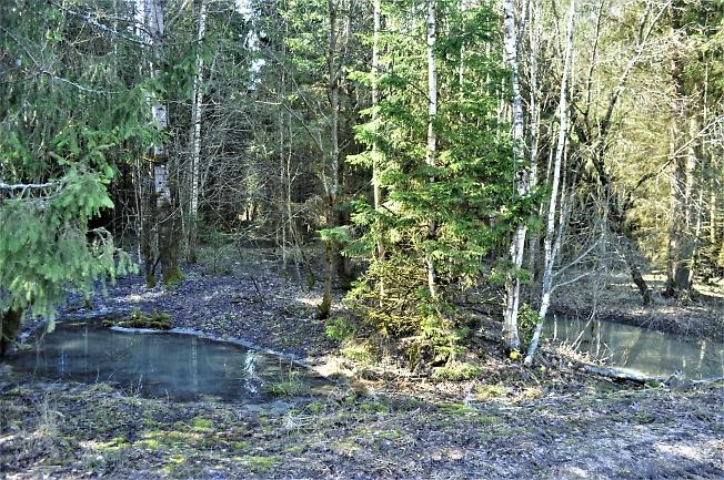 Проталины в лесу