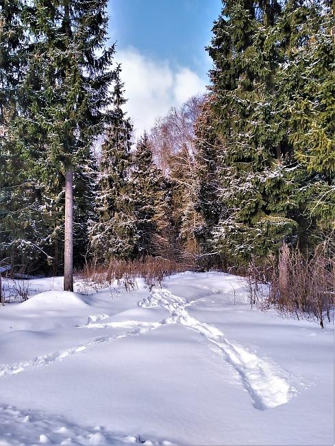 Таинственный , манящий лес
