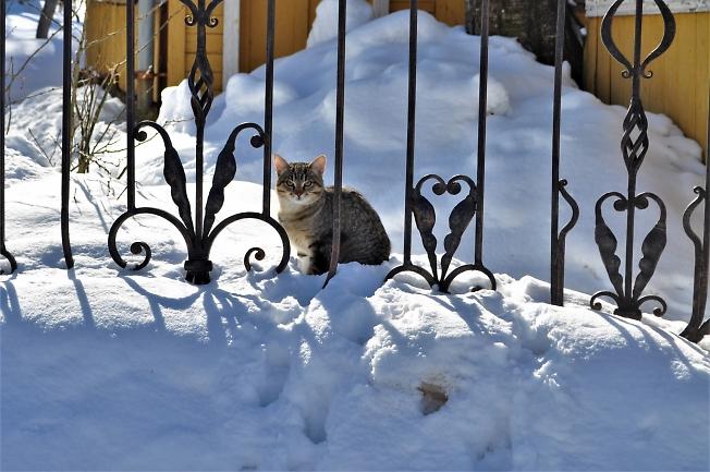 Котик за решеткой