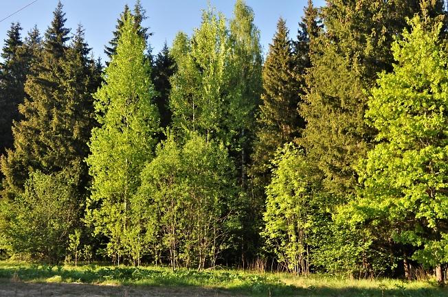 Нарядный лес