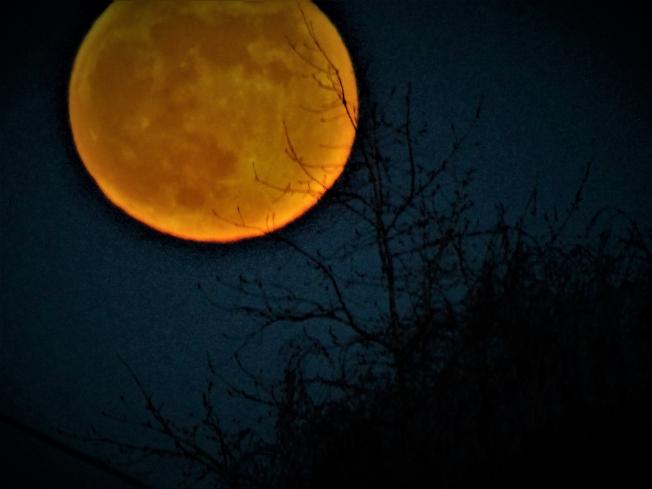 Для Тани!  Мои снимки луны.