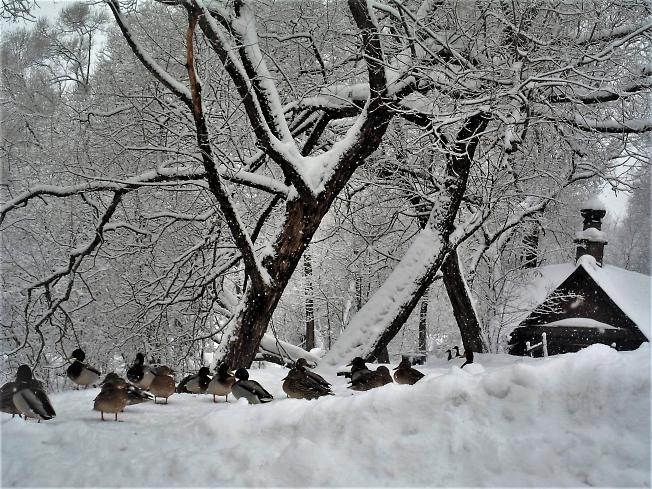 В снежных завалах теплится жизнь...