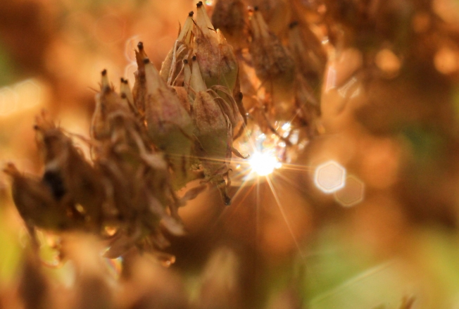 Капелька солнца