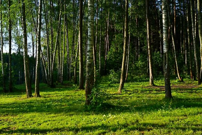 В утреннем лесу