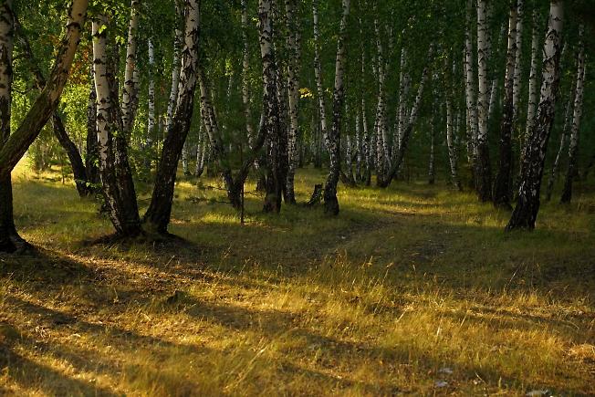 Курганский лес