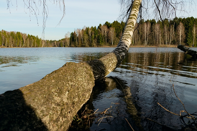 Березка над водой
