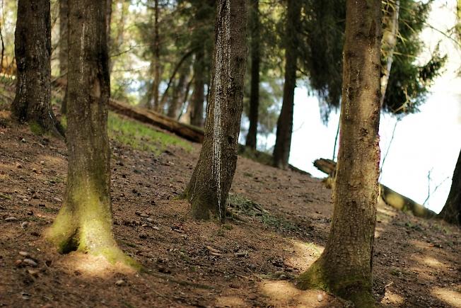 В лесу 2