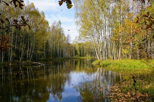 Лесной пруд 2