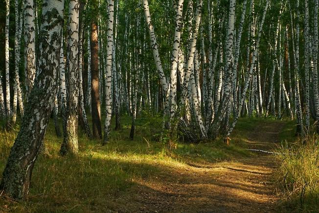 Лесной дорогой