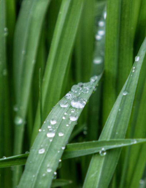 Во время дождя 2