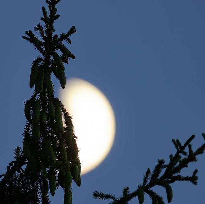 Лунная зарисовка
